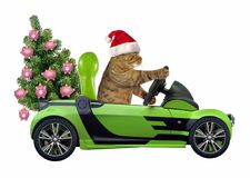 Cat with the Christmas tree in the green car. The cat in a Santa Claus hat with the Christmas tree is in the green open car. White background royalty free stock images