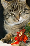 Cat with Christmas Tree Toy Stock Image