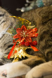 Cat with Christmas Tree Toy Royalty Free Stock Photos