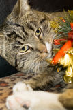 Cat with Christmas Tree Toy Stock Photos