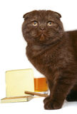 Cat with cigarettes and whisky. Cat Scottish fold with cigarettes and whisky on a white background Royalty Free Stock Images