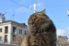 Cat in the city center stock photography
