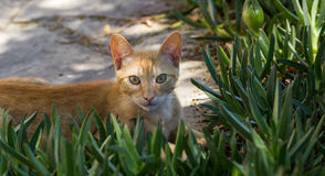 The Cat. Cat in city Pals, Spain stock image