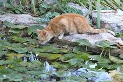 Cat in the City Park, Valencia, Spain Stock Image