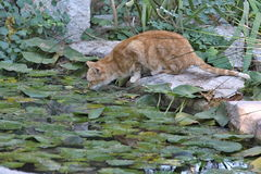 Cat in the City Park, Valencia, Spain Stock Images