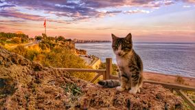 Cat and citylife. Landscape Cat Citylife Antalya TURKEY Stock Images