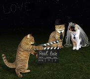 Cat with clapboard and newlyweds stock image