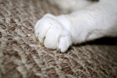 Cat Claw Stock Photo