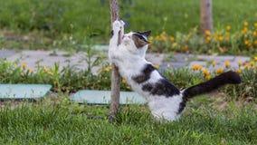 Cat Clawing Tree royaltyfria bilder