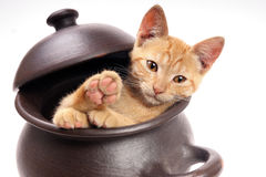 Cat into a clay pan Stock Photo