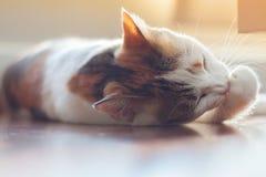 CAT Clean Foto de archivo