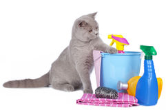 Cat with cleaning agents Stock Photography