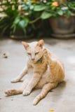 Cat Cleaning Fur Hair royalty-vrije stock afbeeldingen
