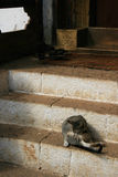 A cat is cleaning itself in front of the entrance of a temple (Bhutan) Royalty Free Stock Image