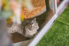 Cat at clear glass window Stock Image