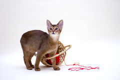 Cat with clew and basket Stock Images