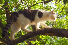 Cat climb apple tree. In the summer garden Stock Photography