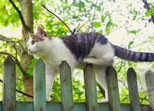 Cat climb fence close up photo Royalty Free Stock Photos