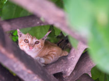 Cat climb on tree Stock Images