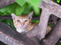 Cat climb on tree Royalty Free Stock Images