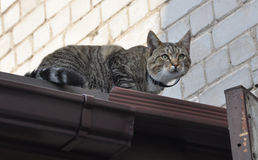 Cat climbed high on the roof Royalty Free Stock Photos