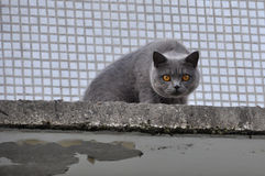 Cat climbed high on the roof Stock Image