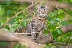 The cat climbed tree Royalty Free Stock Photography