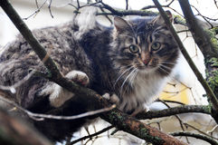 Cat climbed the tree Royalty Free Stock Photography