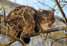 Cat climbed the tree Royalty Free Stock Image