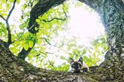 Cat climbed in a tree Royalty Free Stock Image