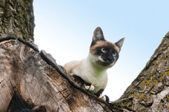 Cat climbed in tree Stock Photography