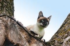 Cat climbed in tree Stock Photography