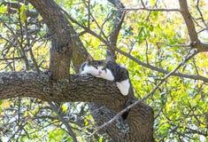 Cat climbed on a tree Stock Photography