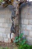 Cat climbing Royalty Free Stock Photos