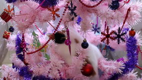 Cat climbing and playing on the Christmas tree stock video