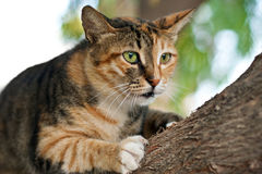 Cat climbing on a tree Royalty Free Stock Photos