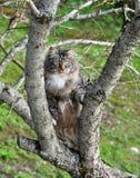 Cat climbing tree Royalty Free Stock Photos