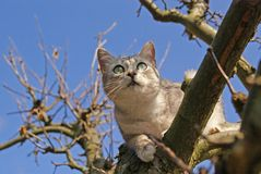 Cat climbing on the tree. And blue sky on the background Stock Image