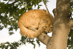 Cat climbing a tree Royalty Free Stock Images