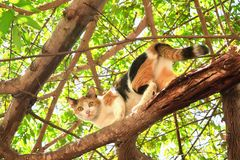 cat climbing on tree Stock Images