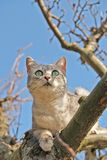 Cat climbing on the tree. And blue sky on the background Stock Images