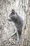Cat Climbing Tree Royalty Free Stock Images
