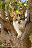 Cat climbing a tree royalty free stock image
