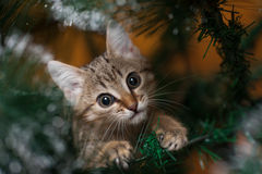 Cat climbing on a tree Stock Images