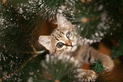 Cat climbing on a tree Stock Image