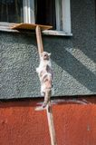 Cat climbing up the ladder leading to the window royalty free stock image