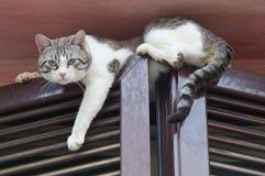 Cat climbing window. Stock Photography
