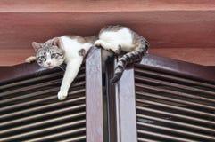 Cat climbing window. Royalty Free Stock Photography