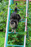 Cat climbs a ladder sent up and down again Stock Photography