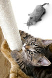 Cat climbs scratcher. Close -up of a kitten who climbs scratcher with the landing Stock Image